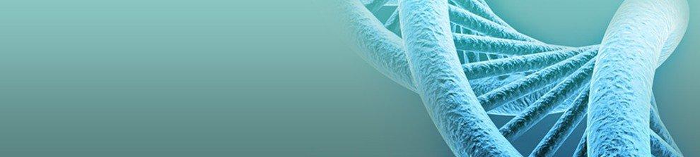 Foto DNA, van de Osteopraktijk in Amsterdam, behandeling van bewegingsbeperkingen van botten, spieren, bloedvaten, ingewanden.
