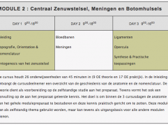Foto Centraal zenuwstelsel, van de Osteopraktijk in Amsterdam, behandeling van bewegingsbeperkingen van botten, spieren, bloedvaten, ingewanden.