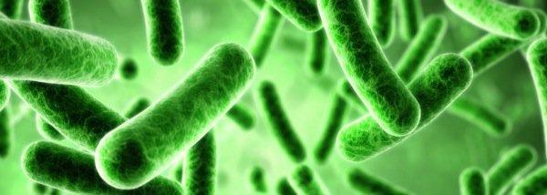 Foto bacteriën, van de Osteopraktijk in Amsterdam, behandeling van bewegingsbeperkingen van botten, spieren, bloedvaten, ingewanden.